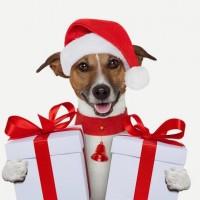 """24 декабря состоится благотворительное мероприятие """"Собака с улицы"""""""