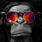 Конференция-вечеринка Digital Monkey в Киеве